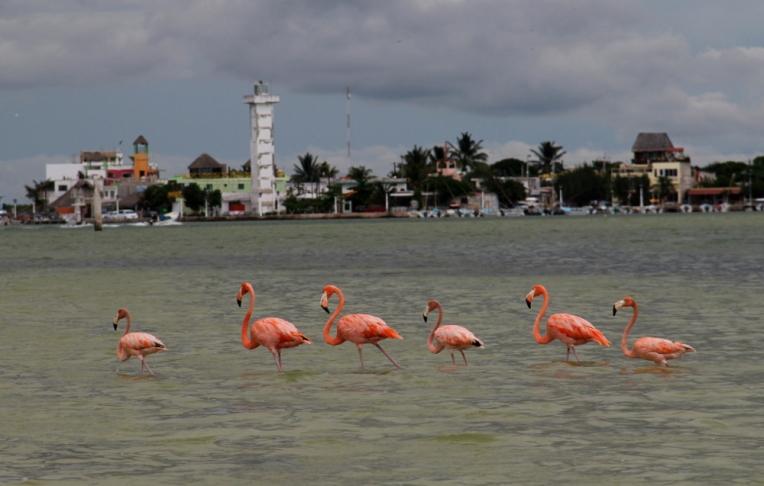 The flamingos framing Rio Lagartos.